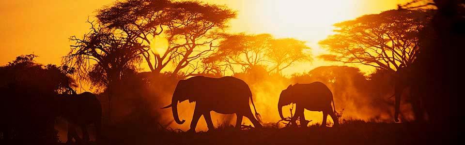 Hlulala Wildlife - elephants