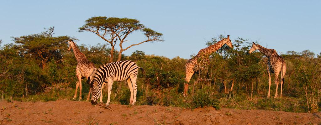 Hluluwe Wildlife