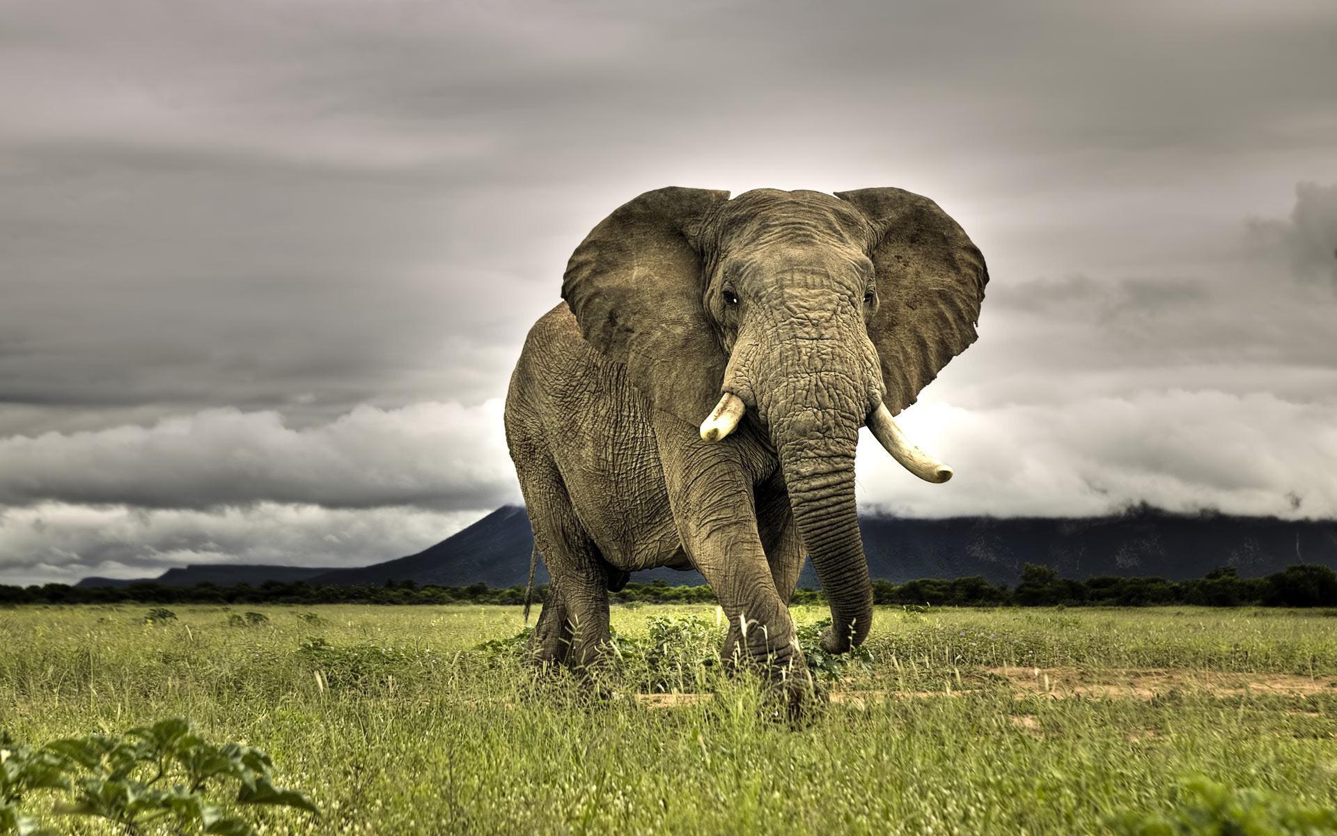 Hluluwe Wildlife - elephant