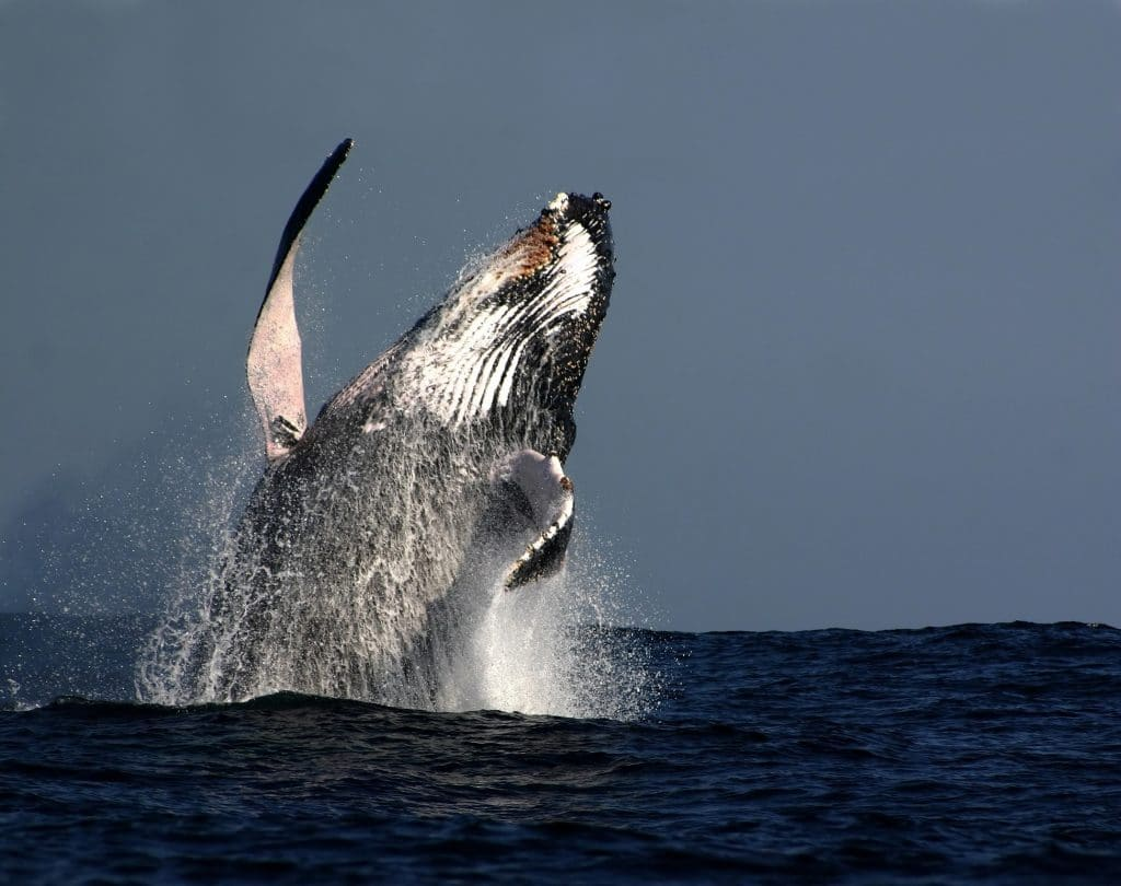 Whale watching in Hluhluwe.